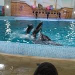 дельфінарій Оскар у Трускавці (2)