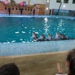 дельфінарій Оскар у Трускавці (3)
